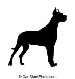 allemand, grand, silhouette, danois, chien
