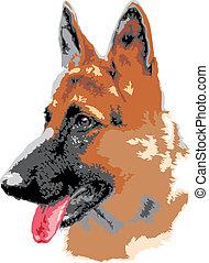 allemand, portrait, chien, shepard
