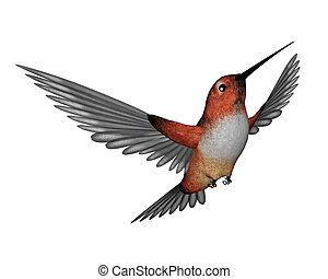 allen, colibrí, -, 3d, render