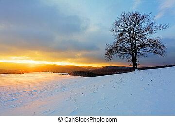 allena, träd, på, äng, hos, solnedgång, hos, vinter
