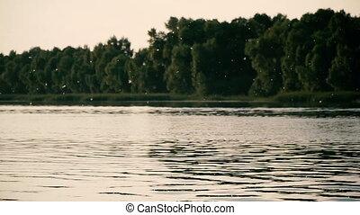 Allergy. Poplar fluff flies along the river