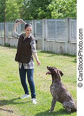 allevatore, addestramento, cane