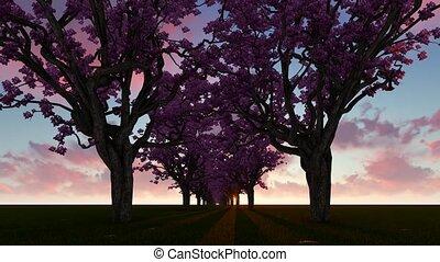 Alley Cherry blossom trees 4k