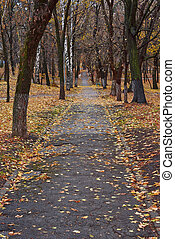Alley covered with fallen leaves in autumn.