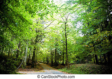 Alley in autumn forest