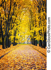 Alley in autumn park