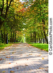 Alley in autumnal park