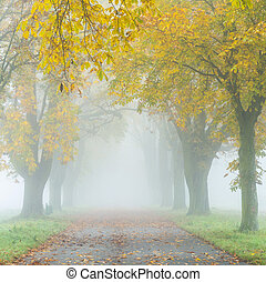 alley in fog with trees in autumn - colorful alley in fog...