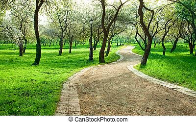 Alley in green apple garden