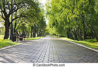 Alley in green park. Spring morning, after rain.