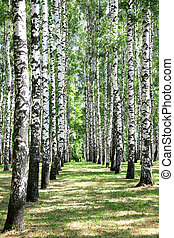 Alley in july birch grove