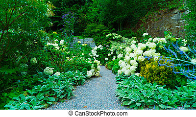Alley in the park with flowers of white hydrangea.