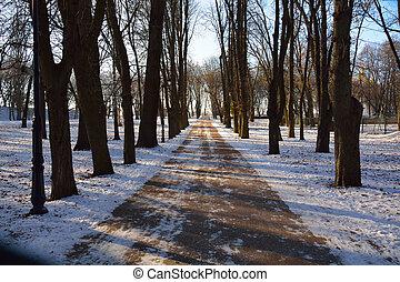 alley in the winter Chernihiv park, Ukraine