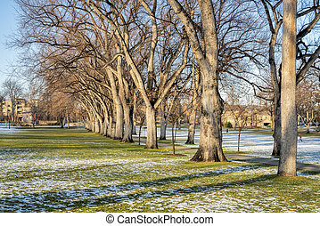 alley of American elm trees in fall scenery - alley of old ...
