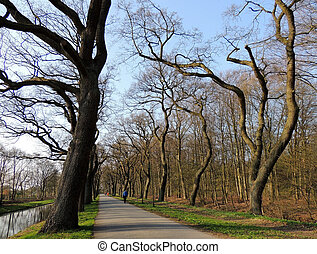 Alley of curved trees in park in early spring