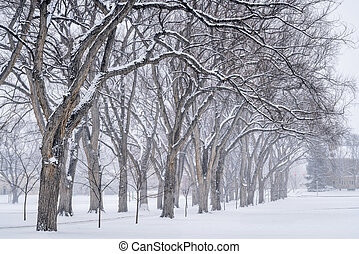 alley of old elm trees at university campus - Alley of old ...