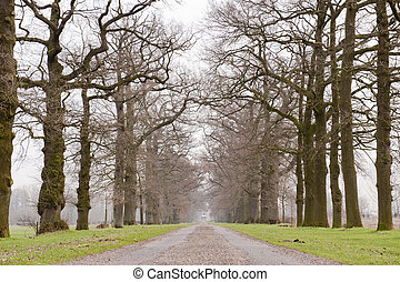 Alley of old historic trees in winter