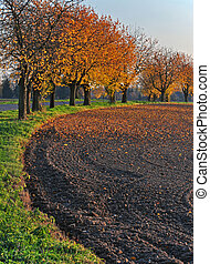 Alley of trees at the edge of the field in the afternoon autumn sun.