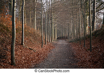alley - forest , alley to the forest in Denmark at the end...