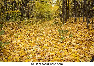 alley strewn with yellow autumn