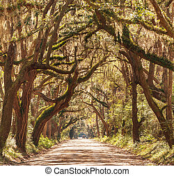 Alley - Trees tunnel -Botany Bay, South Carolina