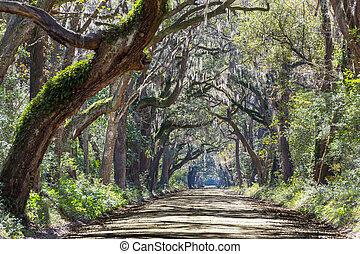 Alley - Trees tunnel -Botany Bay, South Carolina
