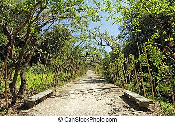 alley with bay laurel,