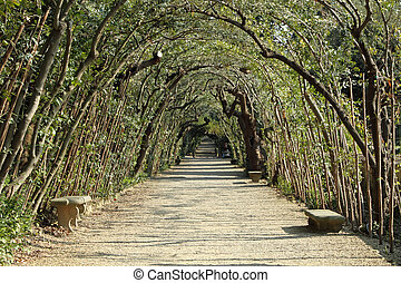alley with bay laurel,evergreen tree, in historic Boboli...