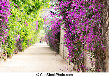 Alley with blooming flowers in spring park