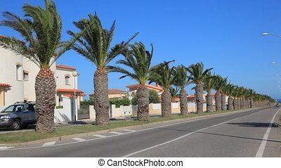 Alley with palm trees - Alley with date palm trees in...