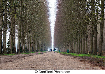Alley with path line of trees at Versailles garden in winter.