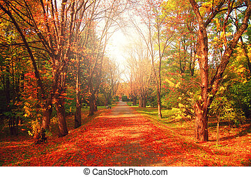 Alley with red leaves in autumn park