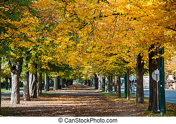 Alley with trees on autumn day