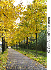 alley with yellow autumn trees