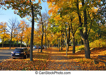 Alley with yellow maples in Fulda, Hessen, Germany