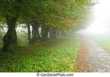 alleyway in foggy park