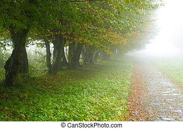 alleyway in foggy park