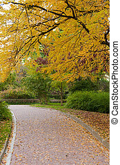 alleyway with paved road to autumn park. The Lvov park