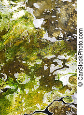 Geo thermal algae in a stream coming from a volcanic lake