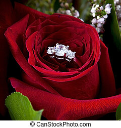 alliance, dans, rose, volonté, vous, marier, me?