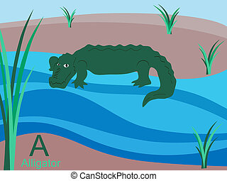 alligator, alfabet, djur