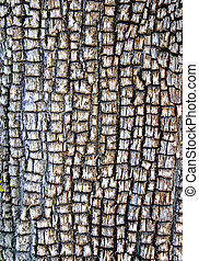 Alligator Juniper Bark - Bark of a mature Alligator Juniper,...
