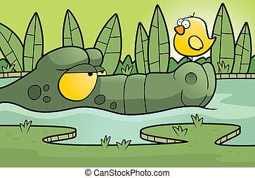 alligator, sumpf