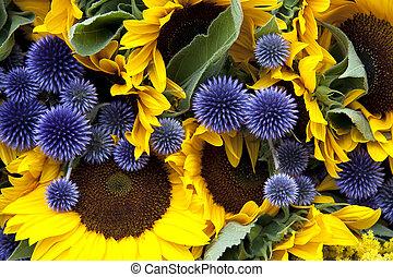Allium and sunflowers - A background of allium and ...