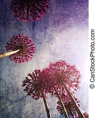 Allium flowers against blue sky