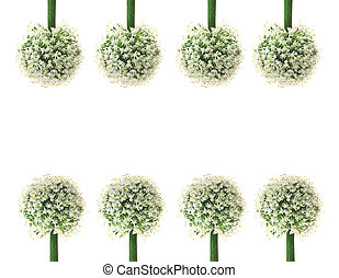 Allium Gladiator Ornamental Onion flower set isolated on white background