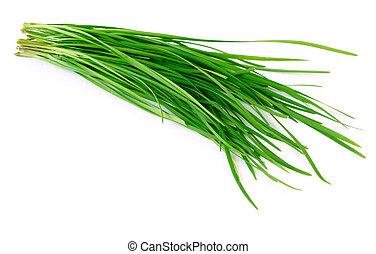 Allium Ramosum He - Chinese allium tuberosum isolated on ...