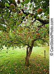 alma, bitófák, gyümölcsöskert