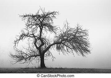 alma fa, alatt, a, köd