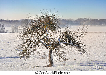 alma fa, alatt, tél